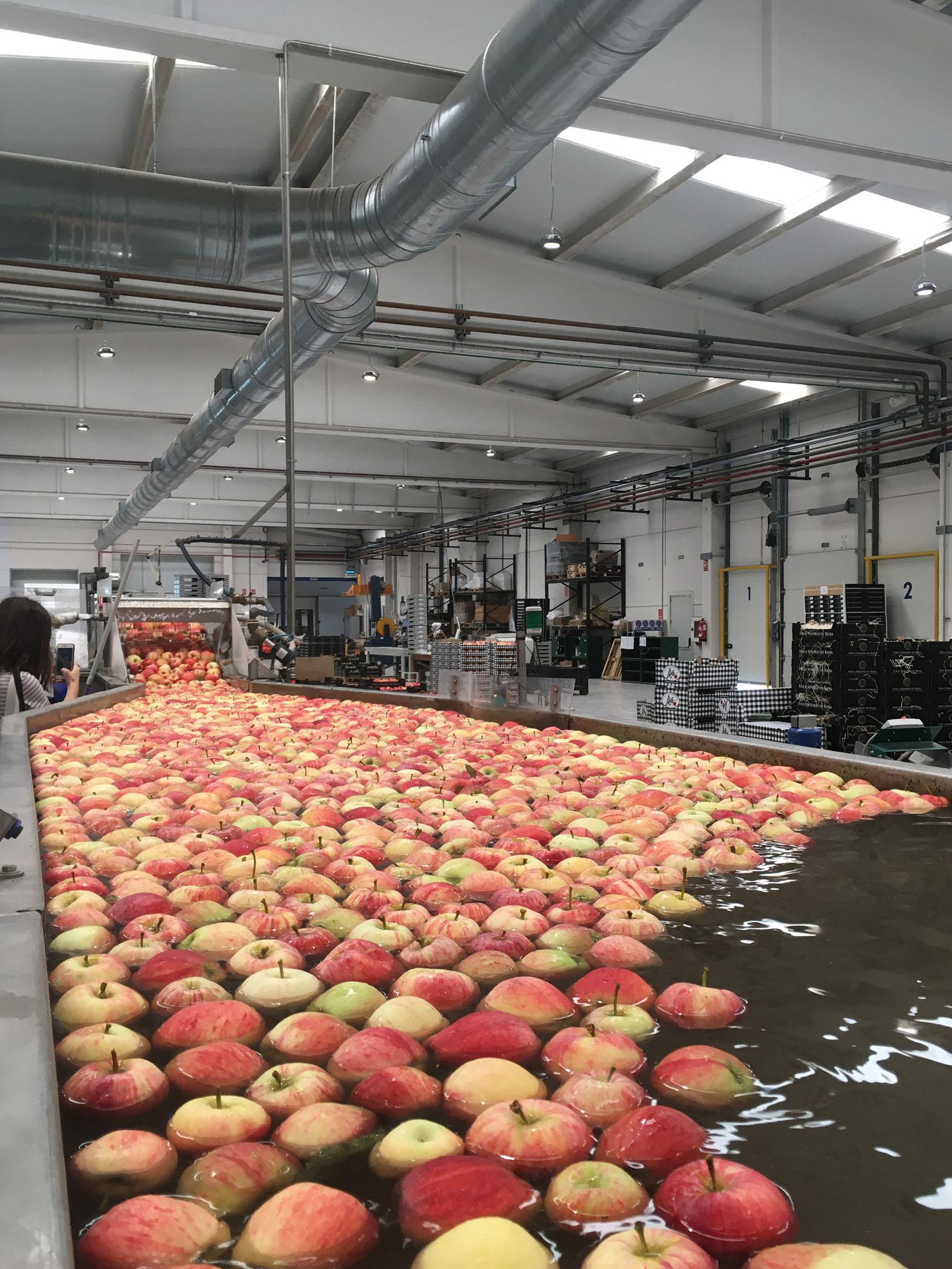 El Máster de Packaging y las manzanas Finca Señorío de Rioja